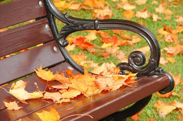 Garden bench in autumn image by Elina (via Shutterstock).